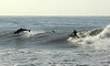 Surfing with Dolphin at the Rincon
